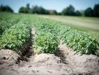 Cijene voća i povrća skaču i do 50 % zbog odgođene sjetve i sadnje