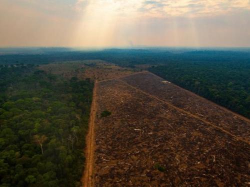 Amazonska prašuma nestaje brže nego ikad
