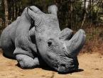 Izumrlo je 60 posto divljih životinja. Za sve je kriv čovjek