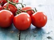 Sa hercegovačkih polja ubrat će se 1000 tona rajčice za Podravku