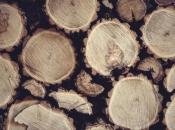 Završio u zatvoru zbog tri metra drva