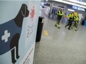 Njemački psi nanjušili covid-19 s 94 posto preciznosti