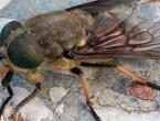 Slavonija u panici: komarce su zamijenili drugi mnogo opasniji insekti