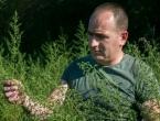Njemački znanstvenici tvrde: Mogući lijek protiv korone raste i u Hercegovini