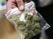 Širokobriježanin uhvaćen s marihuanom