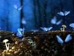Insekti diljem svijeta ugibaju alarmantnom brzinom