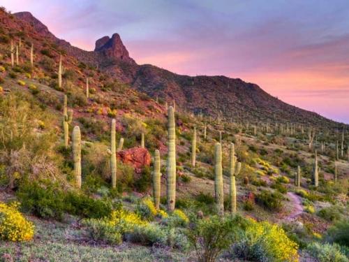 Rascvjetana pustinja