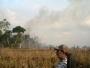 Brazil godišnje gubi 10 tisuća četvornih kilometara šume