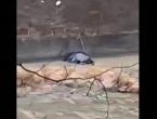 VIDEO| Automobil završio u rijeci Bosni kod Zenice