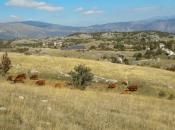 HEET u Rami gradi vjetroelektrane i pokreće proizvodnju zdrave hrane