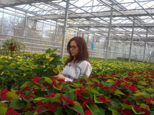 Ivana Marjanović: Kad kupujete Božićnu zvijezdu, birajte onu sa puno listova
