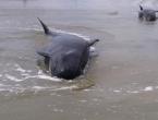 Masovno nasukavanje kitova na jugu Čilea