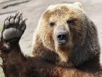 Medvjed upada u vinograd i jede samo najskuplje grožđe