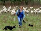 Magistar prava uživa u uzgoju 300 ovaca: Želim biti svoj gazda!