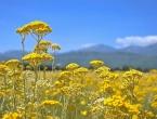 Mirisni putevi – Novi adut Hercegovine