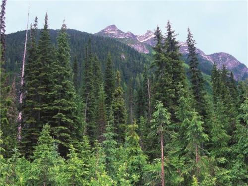 1,6 milijardi ljudi ovisi o šumi