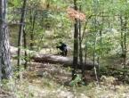 Policija objavila posljednju fotografiju studenta kojeg je pojeo medvjed