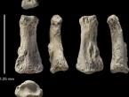 Otkriće jedne kosti mijenja ljudsku povijest