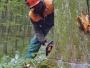 Nasjeklo se 20 posto više šume