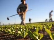 Hercegovački poljoprivrednici u mukama: Mlade ne zanima rad u poljima