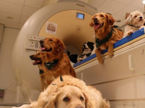 Obučavaju pse da nanjuše covid: 95-postotna uspješnost u detektiranju korone
