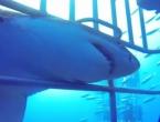 Morski pas pokušao zaskočiti ronioce s leđa