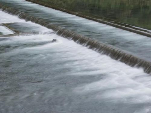 HNŽ će dobiti 43 male hidroelektrane