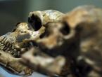 Otkriće koje mijenja klasičnu hipotezu o homo sapiensu