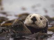 Omogućujemo izumiranje nebrojenih životinja