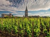 Francuska će ove godine proizvesti 44,7 milijuna hektolitara vina