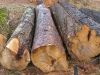 Godišnje se ukrade dva milijuna kubnih metara šume