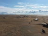 Masovno uginuće kitova na Islandu