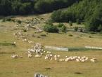 Na Vran planini i Ljubuši suša prepolivila proizvodnju ovčjeg sira