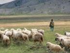 Pastira ni za lijeka: Nitko neće čuvati stoku ni za plaću od 1.500 KM