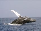 Stotinu ozlijeđenih u sudaru trajekta s kitom
