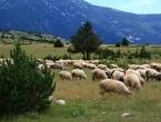 Profesor pedagogije ostavio gradski život, uzgaja ovce