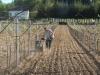 VIDEO: Miroslav Škoro posadio prvi vinograd u Središnjoj Bosni
