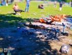 Nijemci u šoku: Grupa ljudi iz BIH u parku ''okrenula'' 12 janjaca