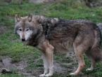 Vukovi kod Tomislavgrada pojeli dva psa