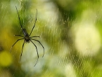 Jednostavan način kojim ćete istjerati paukove iz svog doma