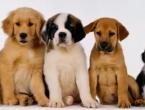 Psi mogu po izrazu lica prepoznati raspoloženje ljudi
