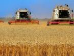 Očekuje nas poskupljenje pšenice?
