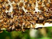 U Posušju prave kilu meda po glavi stanovnika