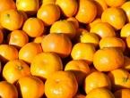 Čapljina  Uhvaćen pri ilegalnom prelasku granice u autu punom mandarina