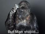 Poruka: Gorila Koko obratila se cijelom svijetu na znakovnom jeziku