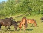 Na Jablaničkom jezeru osnovana ergela za uzgoj bosanskog brdskog konja