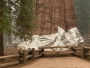 Najveće stablo na svijetu umotano u deke otporne na vatru