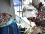 Globalno zagrijavanje: Ulov ribe smanjit će se za 40 posto