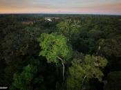 Amazonsku prašumu stvorio asteroid koji je ubio dinosaure