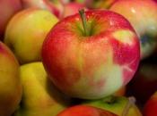 Od danas zabrana uvoza jabuka iz BiH u Rusiju